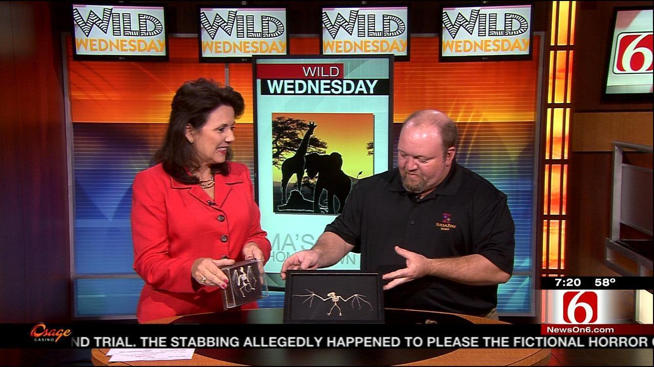 Wild Wednesday: Tulsa Zoo Teaches Wildlife Conservation