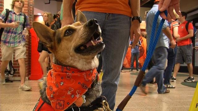OSU Pet Therapy Program Helps Students Transition To College Life