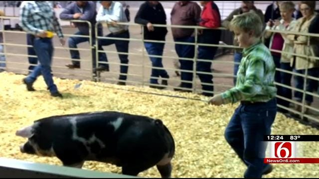 Summer-Like Heat, Lines Claim Life Of Show Pig At Tulsa State Fair