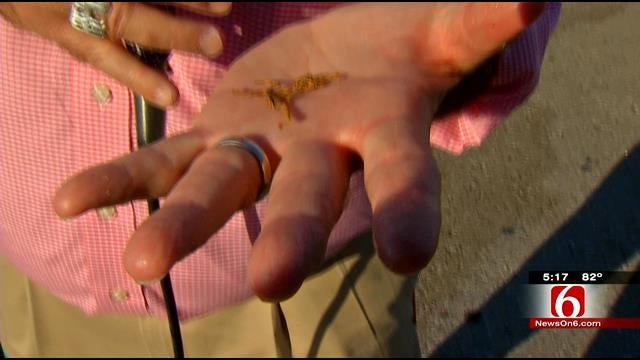 News On 6's Rick Wells Tries A Scorpion At Tulsa State Fair