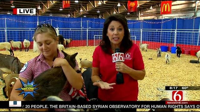LeAnne Taylor Visits The Petting Barn At The Tulsa State Fair