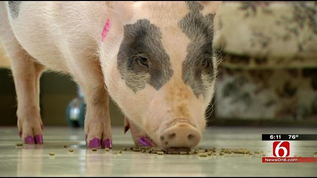 Bixby Veterinary Clinic's Mini-Pig Graces Magazine Cover