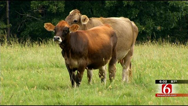 Thieves Target Delaware County Rancher's Cattle