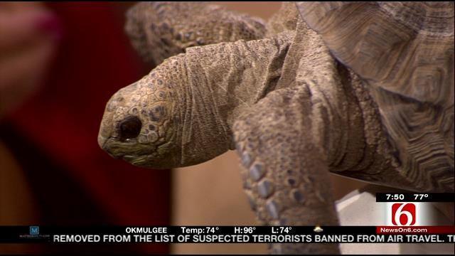 Wild Wednesday: Aldabra Tortoise
