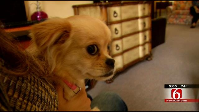 Domestic Violence Shelter Improvements To Allow Victims To Stay With Pets