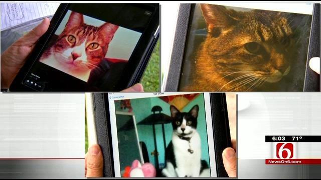 Possible Burglars Kill Family's Cats, Cherokee County Official Says