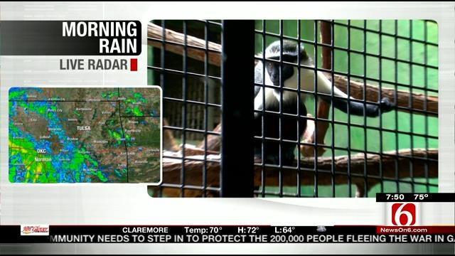 Wild Wednesday: Baby Diana Monkey
