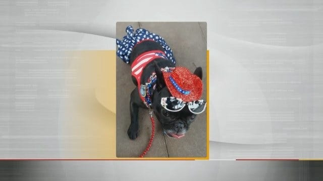 LeAnne Taylor Shares Pics Of Tulsa Therapy Dog Bella Rose Reed