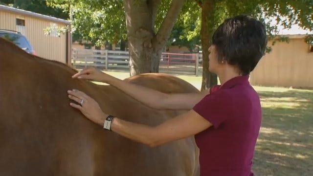 Tulsa Veterinarian Using Acupuncture To Treat Animals Large And Small