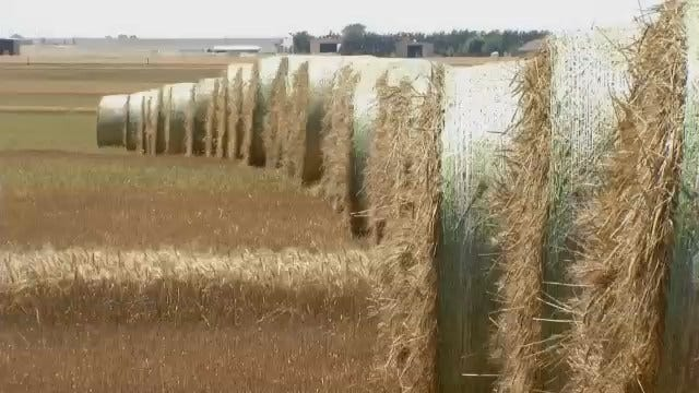 Woods County Hopes Oil Success Offsets Failing Wheat Crop