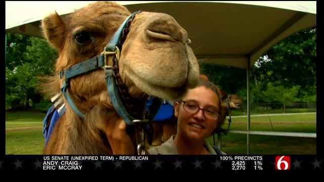 Wild Wednesday: Tulsa Zoo's Sassy The Camel