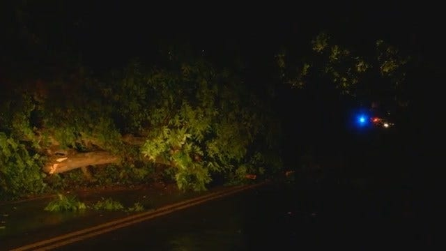WEB EXTRA: Tree In Road On 91st East Of Sheridan