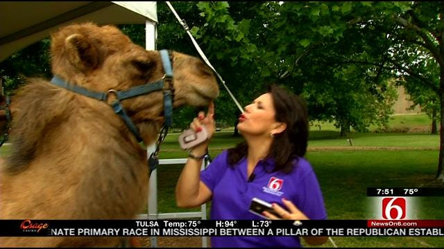 Wild Wednesday Previews Zoo Animals We See On News On 6 This Summer