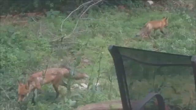 WEB EXTRA: Fox Family In Tulsa Backyard