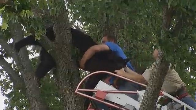 WEB EXTRA: Firefighters, Wildlife Department Rescue Wagoner County Bear
