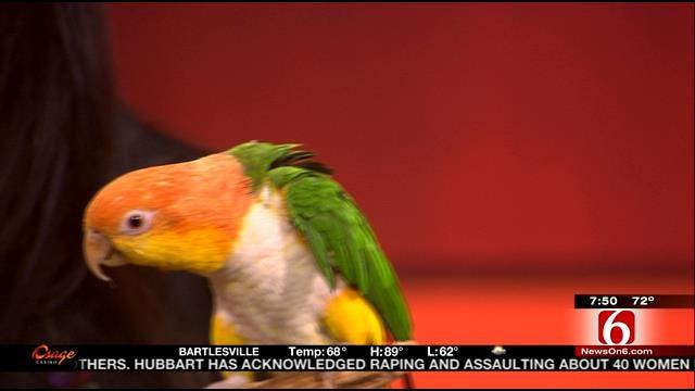 Wild Wednesday: Parrot Named Monkey