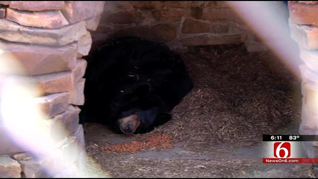Creek County Woman Owner Of Two Black Bears