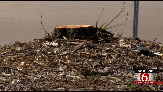 LaFortune Park Goers Surprised To See Trees Down To Stumps