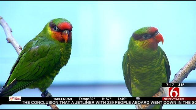 Wild Wednesday: Birds In Tulsa Zoo's Conservation Building