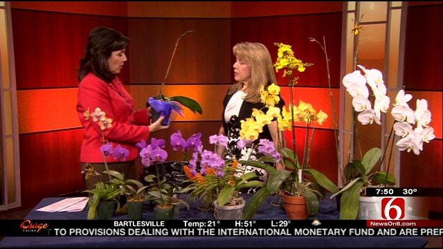 Tulsa's Orchids In The Park