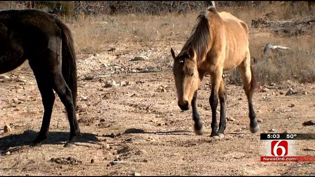 Creek County Residents Say Owner Neglects, Starves Her Horses