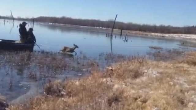NewsOn6.com Share Video: Locust Grove Fire Department Deer Rescue