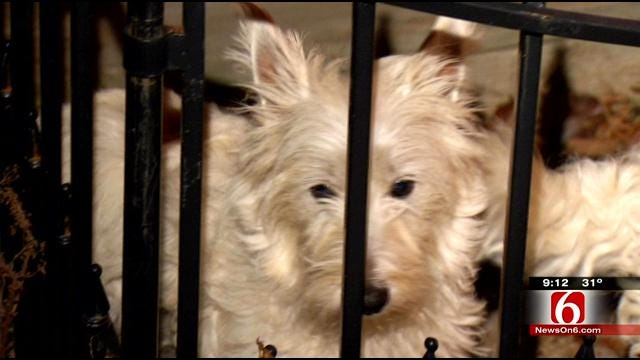 Lost Green Country Dog Returns Home For The Holidays
