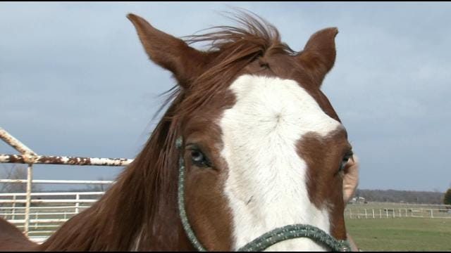 Oklahoma Rancher Says Horse Slaughter Is Lesser Of Two Evils