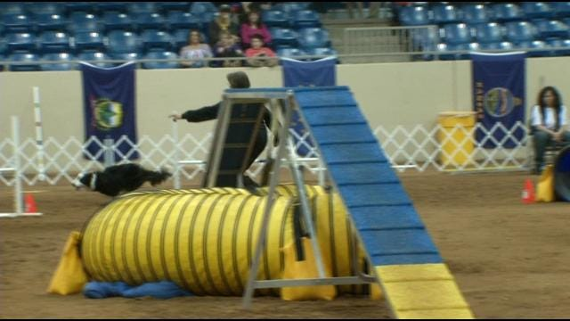 17th Annual National Canine Agility Championship Kicks Off In Tulsa