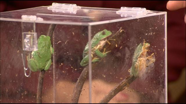 Wild Wednesday: Mexican Leaf Frog