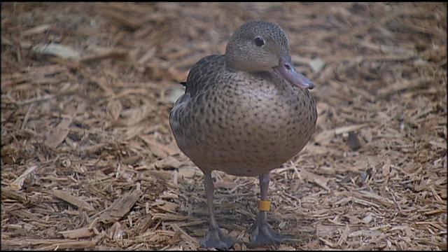 Wild Wednesday: New Bird Exhibit At Tulsa Zoo