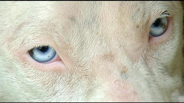 Muskogee Animal Shelter Turns To Social Media To Help Abused Dog