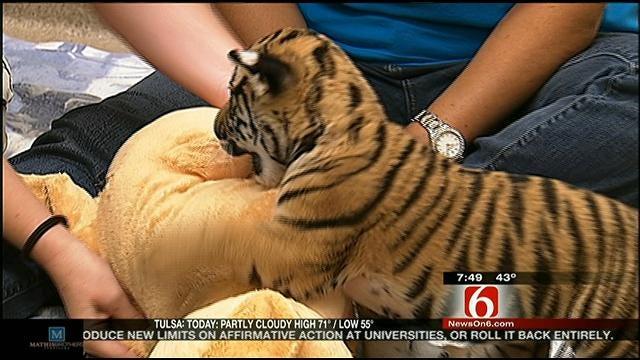 Wild Wednesday: Tiger Cub To Move To Washington State Zoo