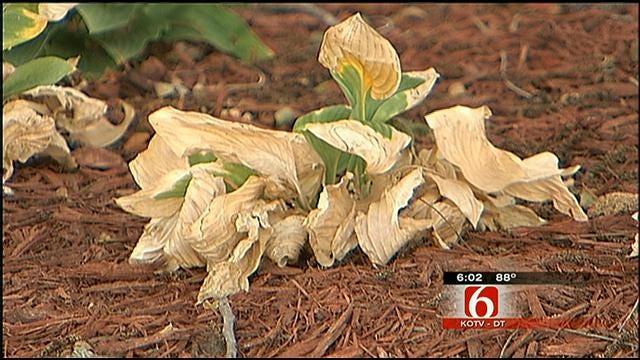 Bone-Dry Oklahoma Landscape Taking Its Toll