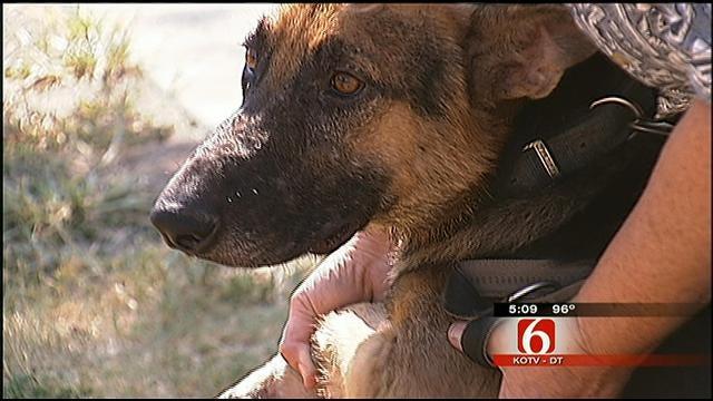 Mannford German Shepherd Rescue Burned, Displacing 20 Dogs