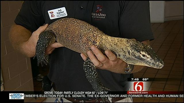 Wild Wednesday: Tulsa Zoo's Komodo Dragon