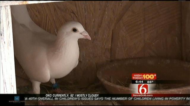Fly The Coop: Pigeon Racing