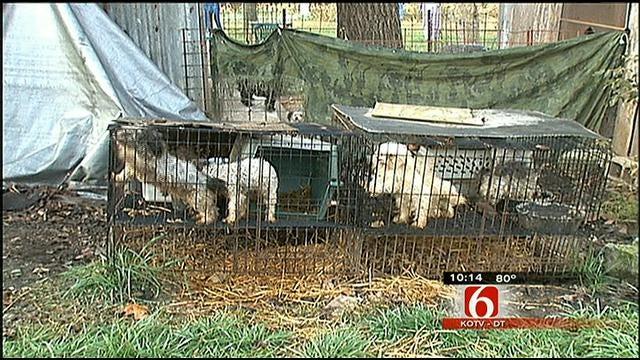 Oklahoma Impact Team Investigates Oklahoma Puppy Mills