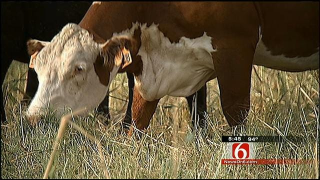 Drought Has Oklahoma Ranchers, Including Travis Meyer, Praying For Rain
