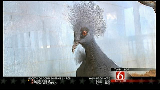 Wild Wednesday: Tour Of Tulsa Zoo's Bird Area