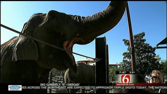 Wild Wednesday: Working With The Tulsa Zoo's Elephants