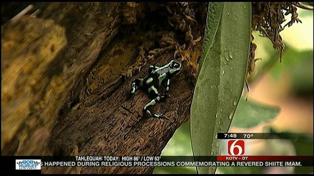 Wild Wednesday: Poison Tree Frogs