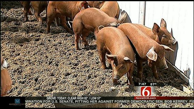 Wild Wednesday: New Babies At Tulsa Zoo
