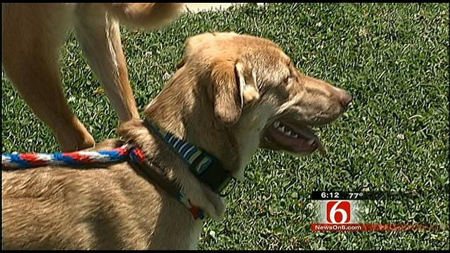 Jenks Teacher Rescues Stray Dogs From Afghanistan