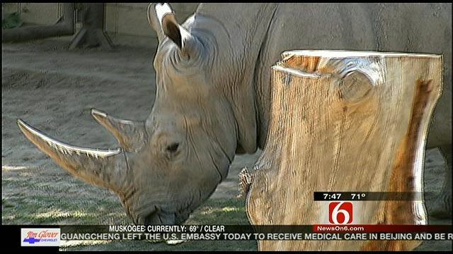 Wild Wednesday: Cinco de Rhino
