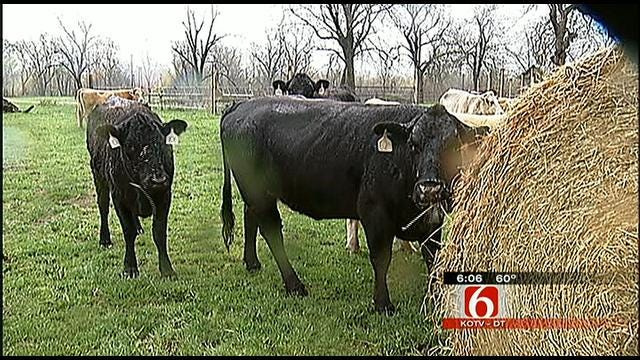 Oklahoma Ranchers Hit Hard By Drought Welcome Rainfall