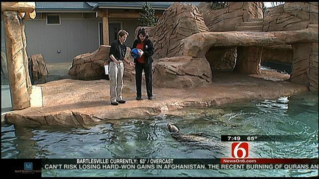 Wild Wednesday: New Sea Lion Exhibit