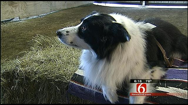 Dewey Dog Nominated For National 'Hero Dog Award'
