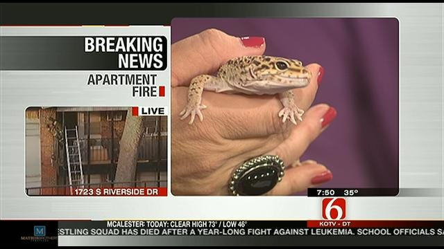 Wild Wednesday: Leopard Gecko