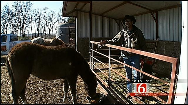 Oklahoma's Own: Catoosa Ranch Rescues Livestock